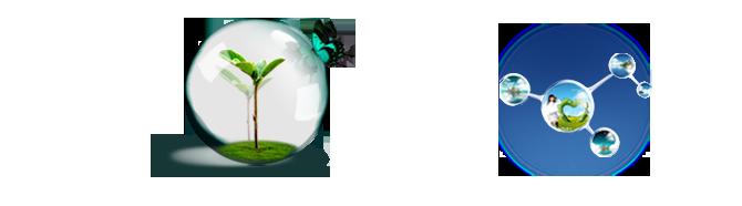 東和酵素株式会社 | 微生物の力で限りなく地球環境を保全する|会社概要