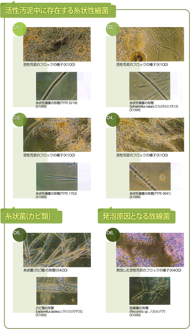 活性汚泥中に存在する糸状性細菌